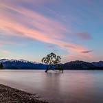 The Wanaka Tree-13 thumbnail