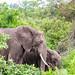 Elephants // Jungle