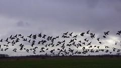 Nisse (Omroep Zeeland) Tags: grijs en regenachtig weer met enkele opklarnigen
