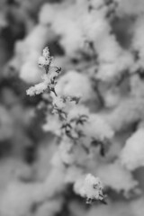 (nicolee.camacho) Tags: snow bro sweden sverige scandinavia nordic scandic frost window glass macro frozen freeze winter ice flakes patterns nature pattern natural colors blue sun daylight sky glitter lonely frosted shimmer forest pines pine