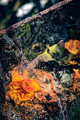 SubZero (m.patriik) Tags: ice autumn flower blur bokeh glass imprefections smartphone smartphoneography og google pixel