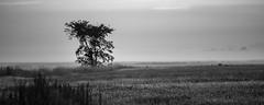 ile 2018-161 (Tasmanian58) Tags: filée champs noirblanc blackwhite contax zeiss 135mm 28135mm sony a7ii tree for mistral brume matin sunrise morningstar landscape monochrome