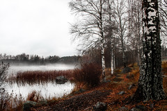 Alongside the water (jonsthanbjork) Tags: autumn fall forrest mist misty evening birch naturephotography nature naturelovers path canon tree trees sky water lake reflections