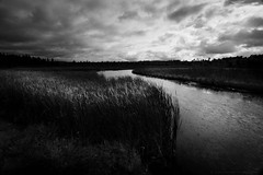 North Country II (Ryan Fonkert) Tags: upnorth ely northcountry mn minnesota wetland water prairie forest nature landscape bw blackwhite sonya900 sonyalpha sonyimages onlyinmn captureminnesota ryanfonkertphotography usa