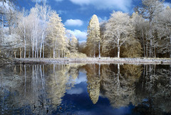 Reflections (Elisafox22) Tags: elisafox22 nikon d80 infraredconverted 590nm supergoldie trees hss sunshine shadows fence fauxcolour infrared reflections water loch november sky bluesky fyvie fyviecastle aberdeenshire scotland landscape outdoors elisaliddell©2018