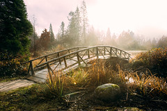 Silence is golden (imImaged) Tags: vancouver canada stanley park bc british columbia grass light natural sun sky mist fog rock landscape old wooden bridge path trees simple mood sigmamc11 canon 24mm ef sony a7ii a7mkii