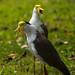 Birdworld Kuranda. (1)