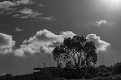 Tree and clouds (kurjuz) Tags: malta mellieħa selmun blackandwhite clousds intothelight tree