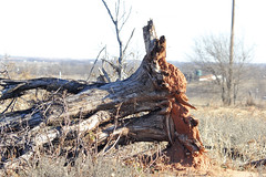 Belcherville 12.23.18.8 (jrbeckwith) Tags: 2018 texas jr beckwith jbeckr photo picture abandoned old history past passed yesterday memories ghosttown belcherville private property