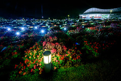 山口ゆめ花博-1000万の花夜景 #4ーYamaguchi Yume Flower Expo - 10 million flowers Night view #4 (kurumaebi) Tags: yamaguchi 阿知須 山口市 nikon d750 山口ゆめ花博 夜 night yamaguchiyumeflowerexpo