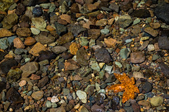 Lone Leaf (Nancy King Photography) Tags: water leaf pebbles oregon pacificnorthwest mapleleaf rocks nature