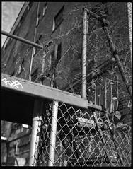 industrial stairway, tangled vines, warehouse, graffiti, River District, Asheville, NC, Koni Omega Rapid 100, Super Omegon 80mm f-3.5, Arista.Edu 200, Ilford Ilfosol 3 developer, 11.2.18 (steve aimone) Tags: stairway industrial metal vines tangled graffiti warehouse riverdistrict asheville northcarolina koniomegarapid100 superomegon90mmf35 primelens aristaedu200 ilfordilfosol3developer 120 120film film mediumformat monochrome monochromatic architecture architecturalforms architecturalmovements