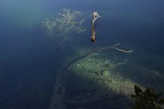 mystic lake (JohannesMayr) Tags: mystic lake see palpuognasee schweiz wasser water light licht tree