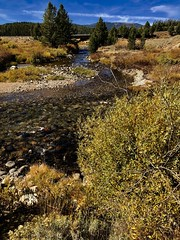 Stanley Creek (The VIKINGS are Coming!) Tags: idaho sawtooth mountains creek trout stream nakedbeauty rawwilderness fall autumn colors leaves golden landscape stanley deer elk bear bare