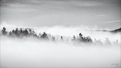Getting out of it... (Ody on the mount) Tags: bäume dunst em5ii filmkorn landschaft mzuiko75300 nebel omd olympus pflanzen schwäbischealb wald bw fog landscape mist monochrome sw trees