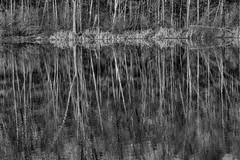 GWSX4450HDR (Gunther-Graphics) Tags: autumn blackandwhite guntherschabestiel michigan xpro1 bw camping desolate forest guntherphotowordpresscom hiking parks photography recreation solitude trails travel upperpeninsula vacation woods mi usa gunagraphicscom