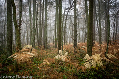 Cropton Forest Fog (Antony Fleming) Tags: fog mist forest bush trees bracken fern grass bark larch pine cropton northyorkshiremoors autumn