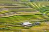 _J5K2647.0918.Lìm Mông.Cao Phạ.Mù Cang Chải.Yên Bái (hoanglongphoto) Tags: asia asian vietnam landscape scenery vietnamlandscape vietnamscenery vietnamscene terraces terracedfields harvest seasonharvest house homes hdr canon canoneos1dsmarkiii tâybắc yênbái mùcangchải caophạ lìmmông thunglũnglìmmông ruộngbậcthang lúachín mùagặt ruộngbậcthangmùcangchải mùcangchảimùagặt mùcangchảimùalúachín nhữngngôinhà ngôinhà canonef200mmf28liiusm sườnnúi flanksmountain
