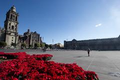 Happy Sunny New Year (gcarmilla) Tags: red rosso zocalo cittadelmessico ciudaddemexico mexicocity mexico morning messico rojo fiori flores stelledinatale cielo floresdenochebuena fleur