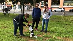 IMG_8586 (Doggy Puppins) Tags: educación canina adiestramiento canino perro dog