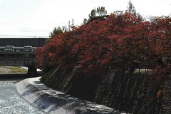 (chikache) Tags: japan kyoto travel autumn nikon d70 50mmf14 sunny calm streetphoto