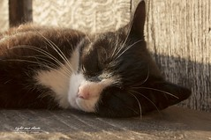 Chill out time in the sunlight (Light and shade by Monika) Tags: sunshine sunlight cat relaxing animal
