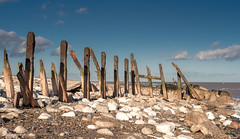 POSTS, SPURN HEAD, E YORKSHIRE_DSC_2493_LR_2.5 (Roger Perriss) Tags: kilnsea spurn d750 beach sand posts shadows rust pebbles stones sky water horizon