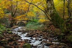 _FLX3944p (Félix Pérez Antón) Tags: pentax k3ii parquenaturalsajabesaya ucieda otoño naturaleza cantabria bosque
