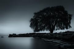 Tree (DutchinCLE) Tags: long exposure bw black white nikon d610 lake erie cleveland