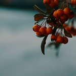 Fruit Nature Bokeh - Tarbek - Schleswig-Holstein  - Germany thumbnail