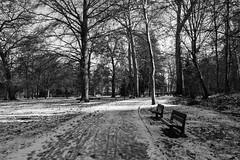 Park (meyer.morgane7) Tags: way parc obernai city white black snow neige park