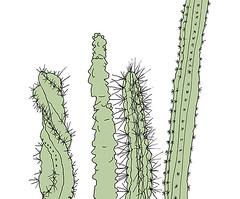 Four Cacti, Botanical Garden, KiT, Karlsruhe, November 2018 (stevefaradaysketches) Tags: urbansketch urbansketchers usk illustration penandinksketch onlocation kit university karlsruhe cacti greenhouse botanicalgarden plants