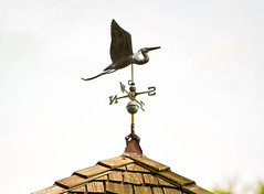 Weather vane (maytag97) Tags: maytag97 nikon d750 weather vane bird egret sky tool roof south direction north beak west background blue east instrument wind arrow flight point forecast windy decoration symbol old metal calm fly flying wings housing wood shingle copper