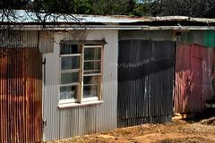 make do (holly hop) Tags: windows brokenwindow corrugated tin shed wall wallwednesdays hww australia 100x myhometown ruraldecay starnaud bush farm rustic neighbours village place town building architecture design pattern