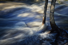 Resisting The Flow - Minneopa State Park, MN (j-rye) Tags: sonyalpha sonya6000 sony a6000 ilce6000 mirrorless park river flooding water tree waves wood minneopastatepark minnesota