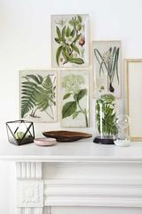 Botanical Glass Trays (Heath & the B.L.T. boys) Tags: livingroom mantel fern botanical cloche hourglass