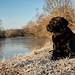 beautiful morning (uwe.kast) Tags: labrador labradorretriever labradorredriver hund haustier dog bichou panasonic lumix leica leicadg1260f2840 g9