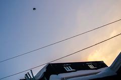 lazing / 'flaccid' set (o6227) Tags: sky skies cloud clouds lines landscape snow blue cyan bird amateur