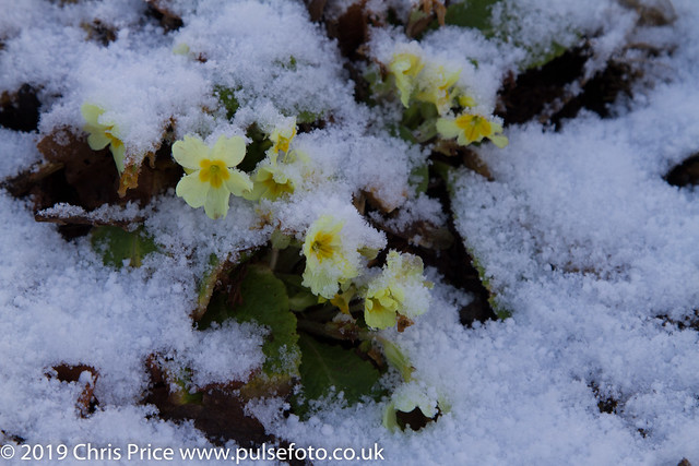 January dusting of Snow