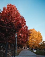 DSCF8968FullRes (djandzoya) Tags: boone boonenc hiking vacation fall fallcolors