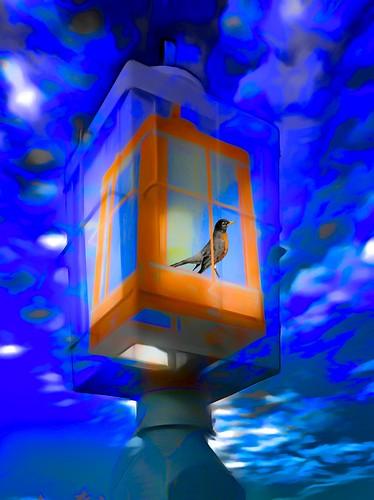 Lamp Post Bird
