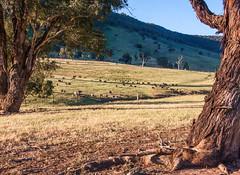 """Sharron Valley"" (dicktay2000) Tags: murringogap ©richardtaylor australia murringo newsouthwales au 20131023img484120131023img4841"