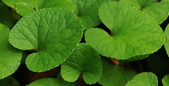 """GREEN"" (terziluciano) Tags: green macromonday canon6dmarkii"