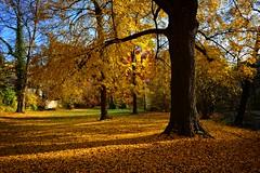 Super autumn (Tobi_2008) Tags: herbst autumn bäume trees laub natur nature sachsen saxony deutschland germany allemagne germania