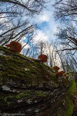 Ekudden visited (aixcracker) Tags: ekudden tamminiemi naturstig luontopolku naturepath borgå porvoo finland suomi nikond500 samyang 8mm nature natur luonto autumn höst syksy november marraskuu