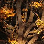 Last Golden Leaves thumbnail