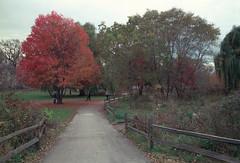 Winnemac Park In The Fall (Jovan Jimenez) Tags: opticfilm 8200i winnemac park leaves tree red canon cosina 28mm f28 fd fujifilm pro 400h film analog analogue fujicolor t50