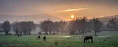 Grazing horses #1 (Ignacio Ferre) Tags: manzanareselreal madrid españa spain horse caballo panorama landscape paisaje sunset puestadesol naturaleza nature nikon grazing pastando atardecer