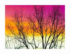A Moment in Time (George McHenry Photography) Tags: sunrise morning sky trees silhouette southcarolina landscape color abstract