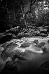 Small falls (lja_photo) Tags: water river stream rocks rock tree trees outdoors flowingwater waterfalls waterfall irrel irrelerwasserfälle woodland wood woods forest copse nature naturephotography natural light fog foggy mist misty longexposure hike hiking black white blackandwhite bw bnw blackandwhitephoto monochrome monotone monoart moody xt20 exploration europe germany waterfront foreground deciduousforest deciduous travel noperson monochromatic dramatic dreamy shadows motion